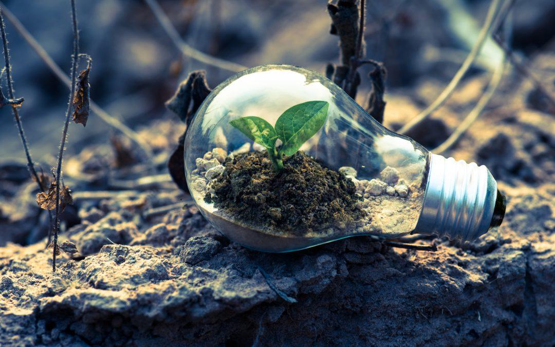 Educar a los niños en la conciencia ecológica